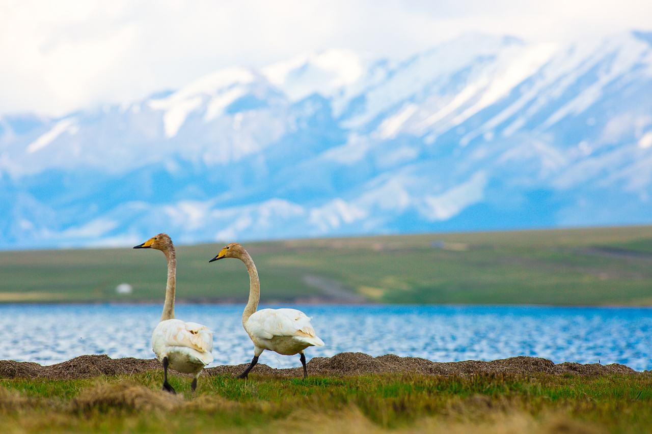 Start a journey to Xingjiang's largest and highest alpine lake--Sayram Lake