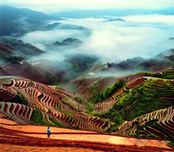 Longji Terraced Field