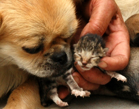 pics of kittens and puppies. pics of puppies and kittens